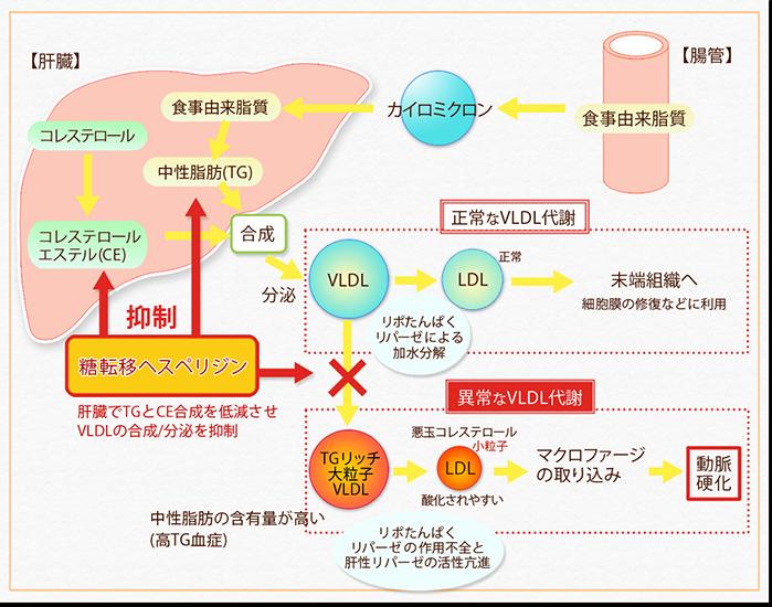 脂質 代謝 異常 脂質代謝異常について メディカルノート